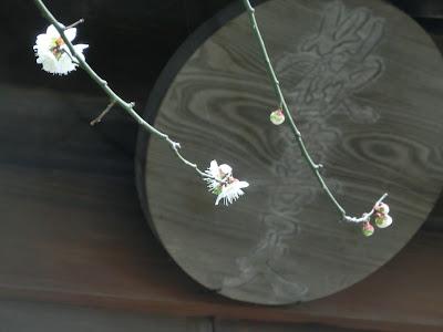 青梅聖天の梅