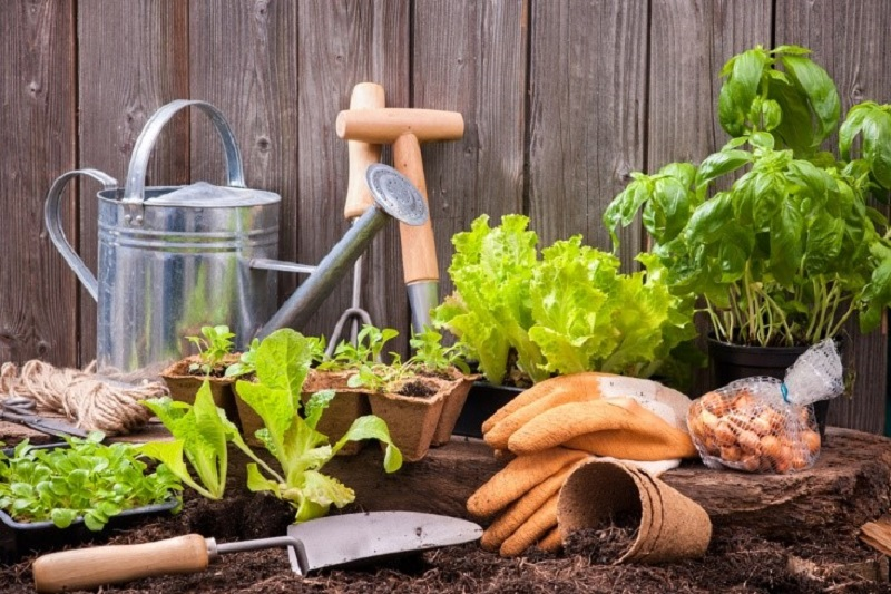 Gardening Plans
