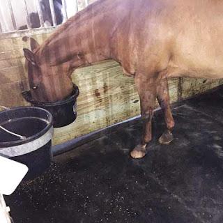Greatmats Rubber Horse Stall Mats