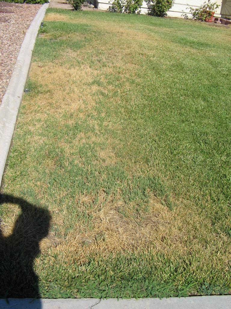Xtremehorticulture of the desert summer brown dead spots - Exterior water service line coverage ...