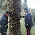 """Andria (Bat). Nascondeva droga in una """"palma"""" della Villa Comunale. Un arresto dei carabinieri"""
