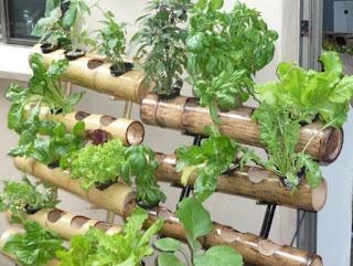 Tehnik Simpel Bercocok Tanam Sayuran Hidroponik