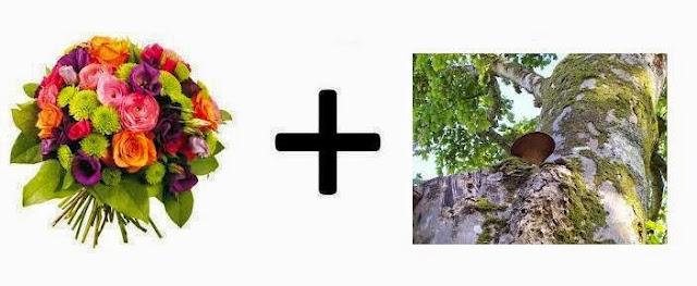 Fragancias, familia olfativa floral - madera musgo
