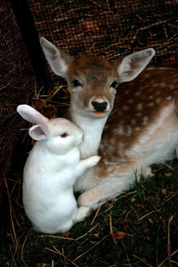 10 Animal Friendship Pictures