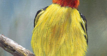 Western Tanager in acrylics
