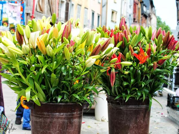 The flower market in Rennes - Part 2