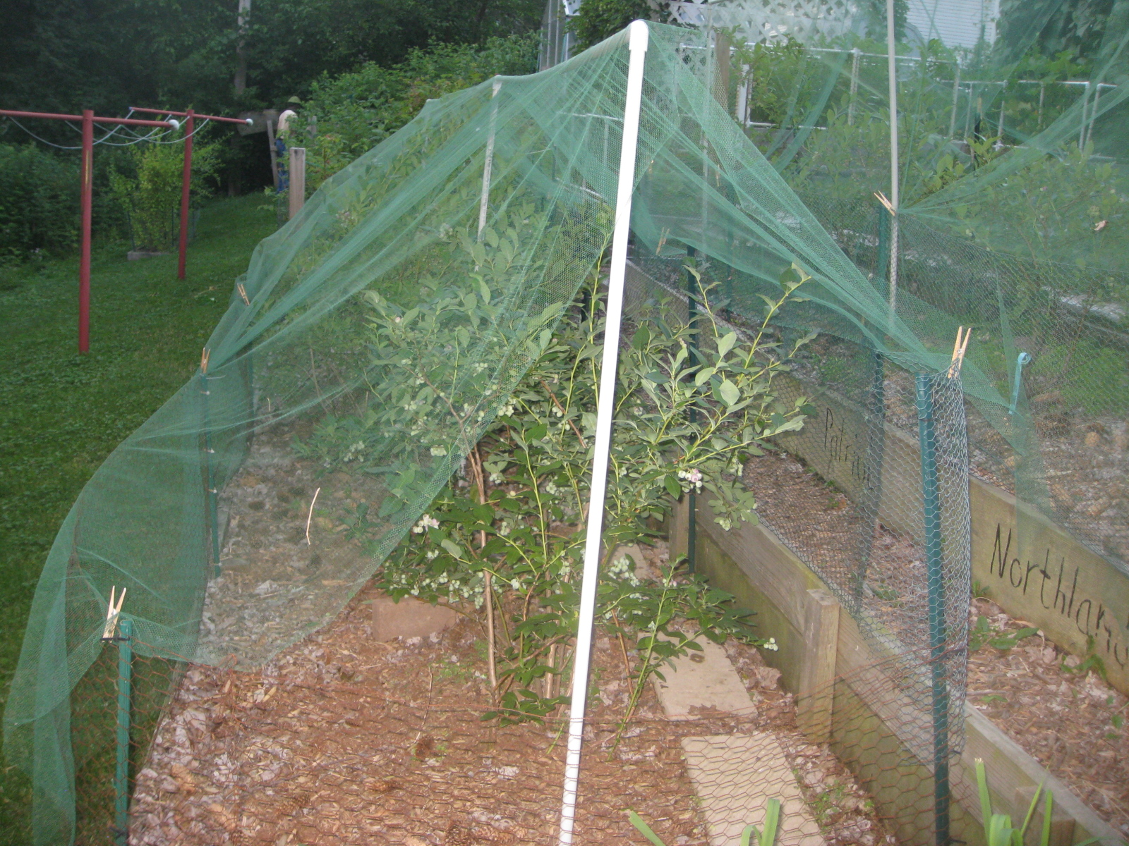 Garden Centers Bird Netting Designed To Protect Crops We Ve Never Purchased That Kind Of But Friends Recently Gave Us One Large Net Because