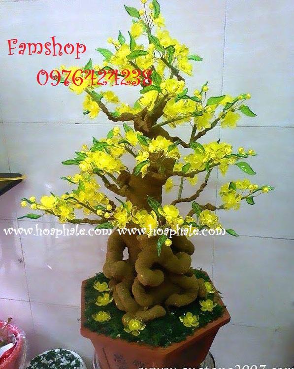 Goc bonsai cay hoa mai tai Tran Thai Tong