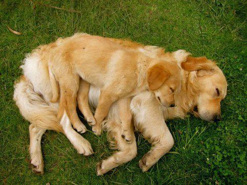 Pet dogs love