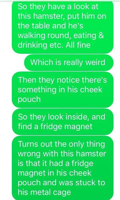 Hamster hasn't moved or eaten in days so vet takes a closer look and makes stunning realization
