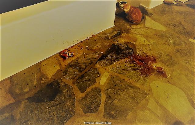 na balkonie grecki rudy kot patrzy w stronę rozsypanych czerwoncyh ziarenek granatu