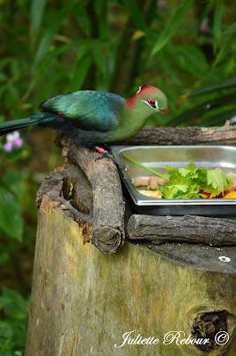 Oiseau tropical, Bioparc Doué-la-Fontaine