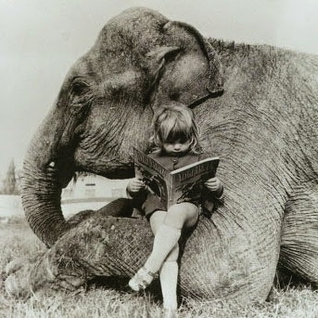 Vintage Photo Girl Reading with an Elephant Chair - Friday Frivolity Everything Elephants -- funny memes and gorgeous vintage wildlife photography!  Plus Nessie, the Loch Ness monster, creeps in there too.  Did you know that some people believe that the Nessie photograph is of an elephant swimming in the loch??  Plus, the link-up for everything fun, funny, happy and hopeful, where hosts comment, pin, tweet, and want to get to know you!  Join the linky blog party!  #FridayFrivolity
