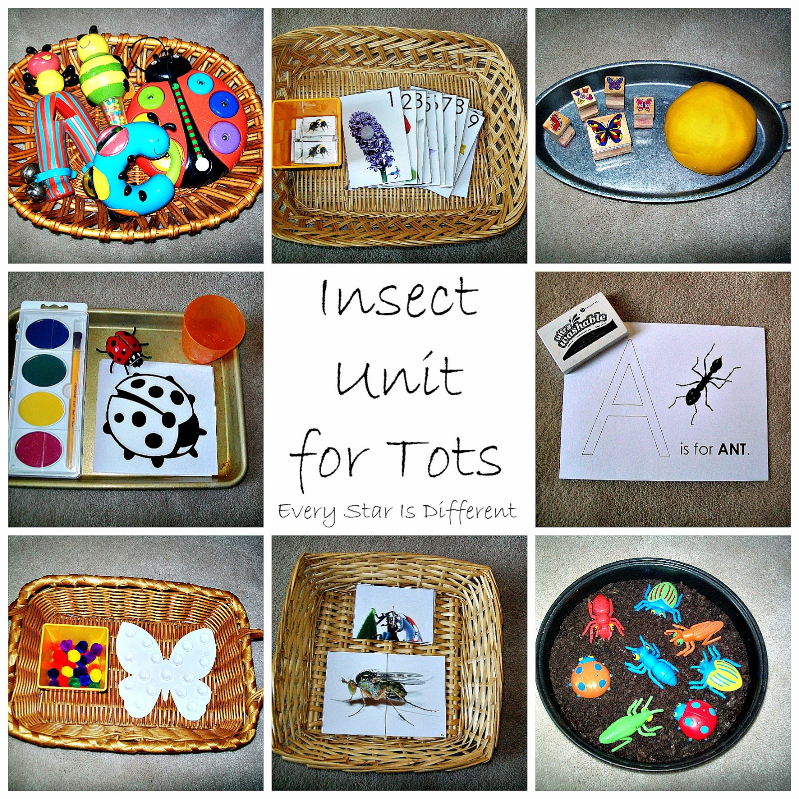 insect unit w free printables every star is different