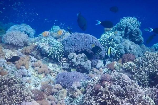 Taman Laut Taka Bonerate Ini Dia Surganya Wisata Laut Di Makassar Paling Fenomenal Special Wisata