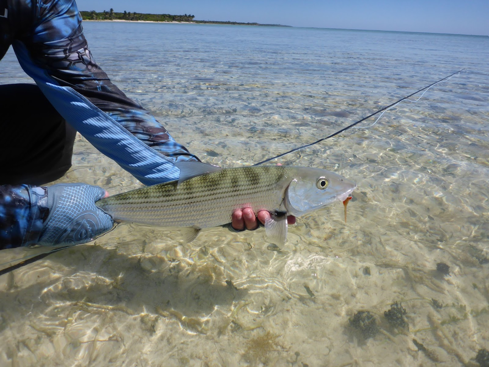 belize essay A few weeks back, my wife, kim, and i travelled to punta gorda, belize, to serve as hosts on orvis adventures hosted couples week at belcampo lodge this week was intended to give anglers and non-anglers alike a taste of belize's remarkable flats fishery, as well as a look at the remarkable physical and.