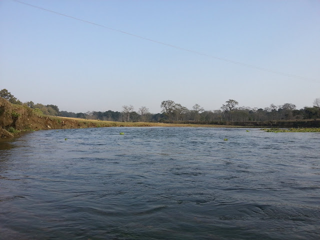 Natural Beauty of Chitwan National Park