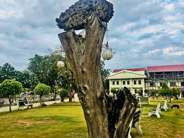 Independence Tree Narra Tree Argao Cebu
