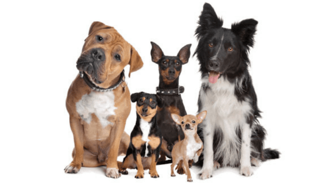 How to Choose a Dog Breed