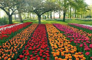 The Largest Flower Garden in Europe