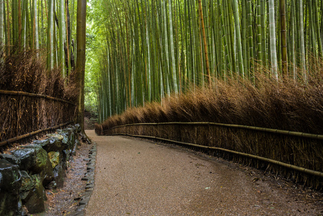 Bosque de bamboo de Arashiyama :: Canon EOS5D MkIII   ISO1600   Canon 24-105@35mm   f/4.0   1/13s