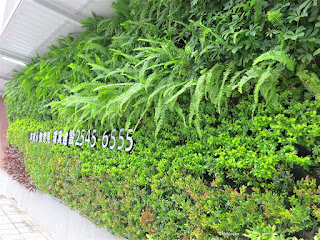 plant wall, Taiwan