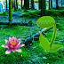 Games2Rule - Verdurous Forest Escape