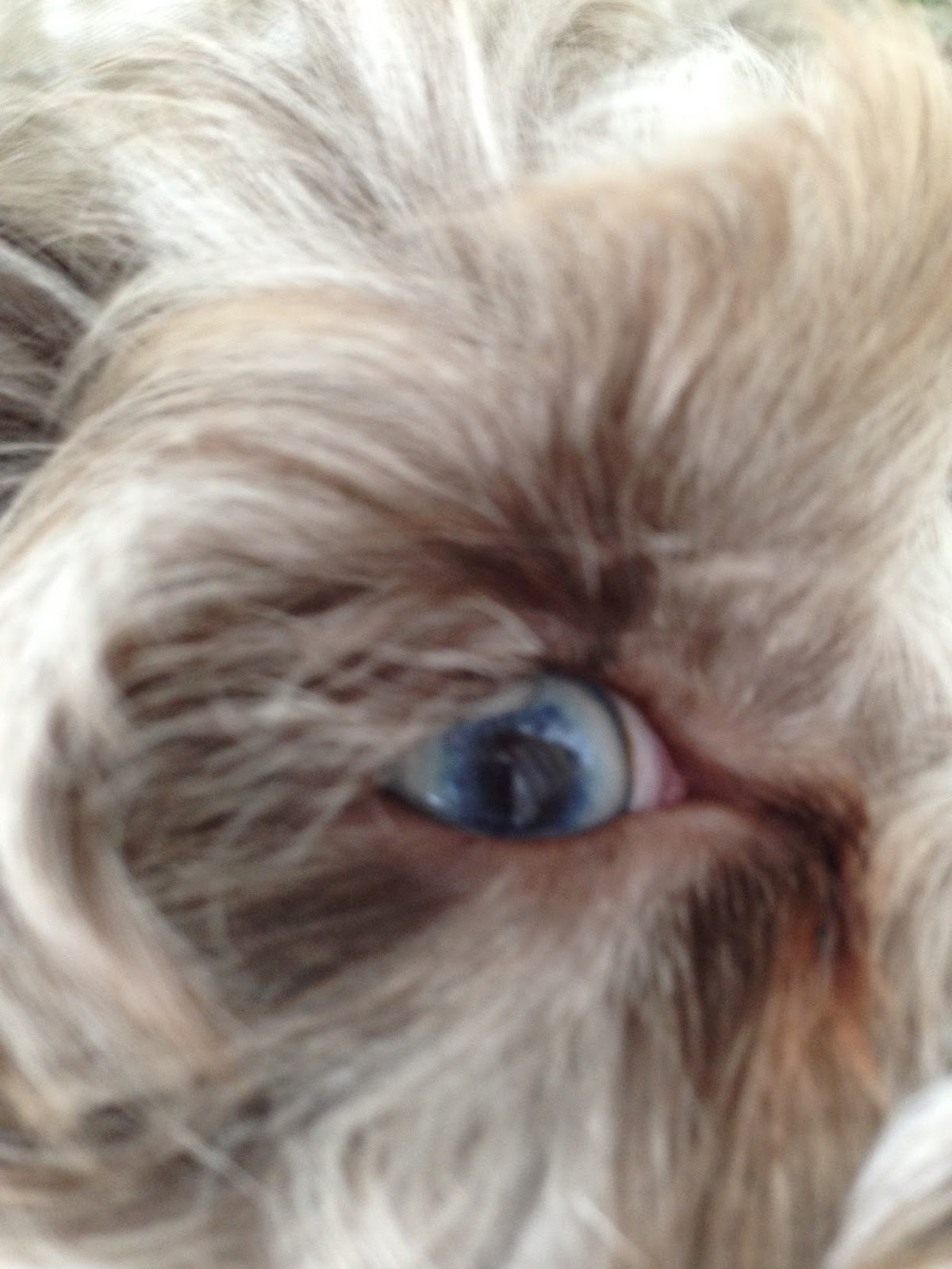 sinatra baby blue eyes blogspot