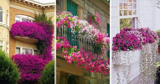 50 πανέμορφα ανθισμένα μπαλκόνια χάρμα οφθαλμών
