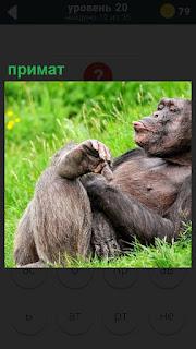 На зеленой лужайке лежит примат и довольный чешет свои ноги