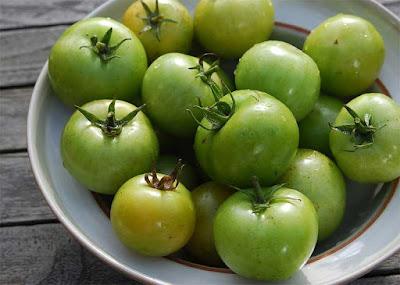 الطماطم غنية بالنيكوتين