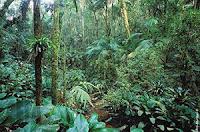 Екваториална гора