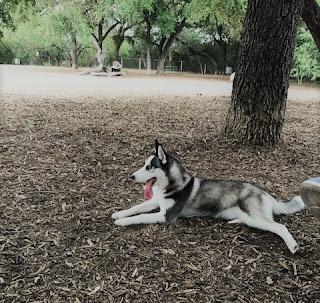 McAllister Park San Antonio TX