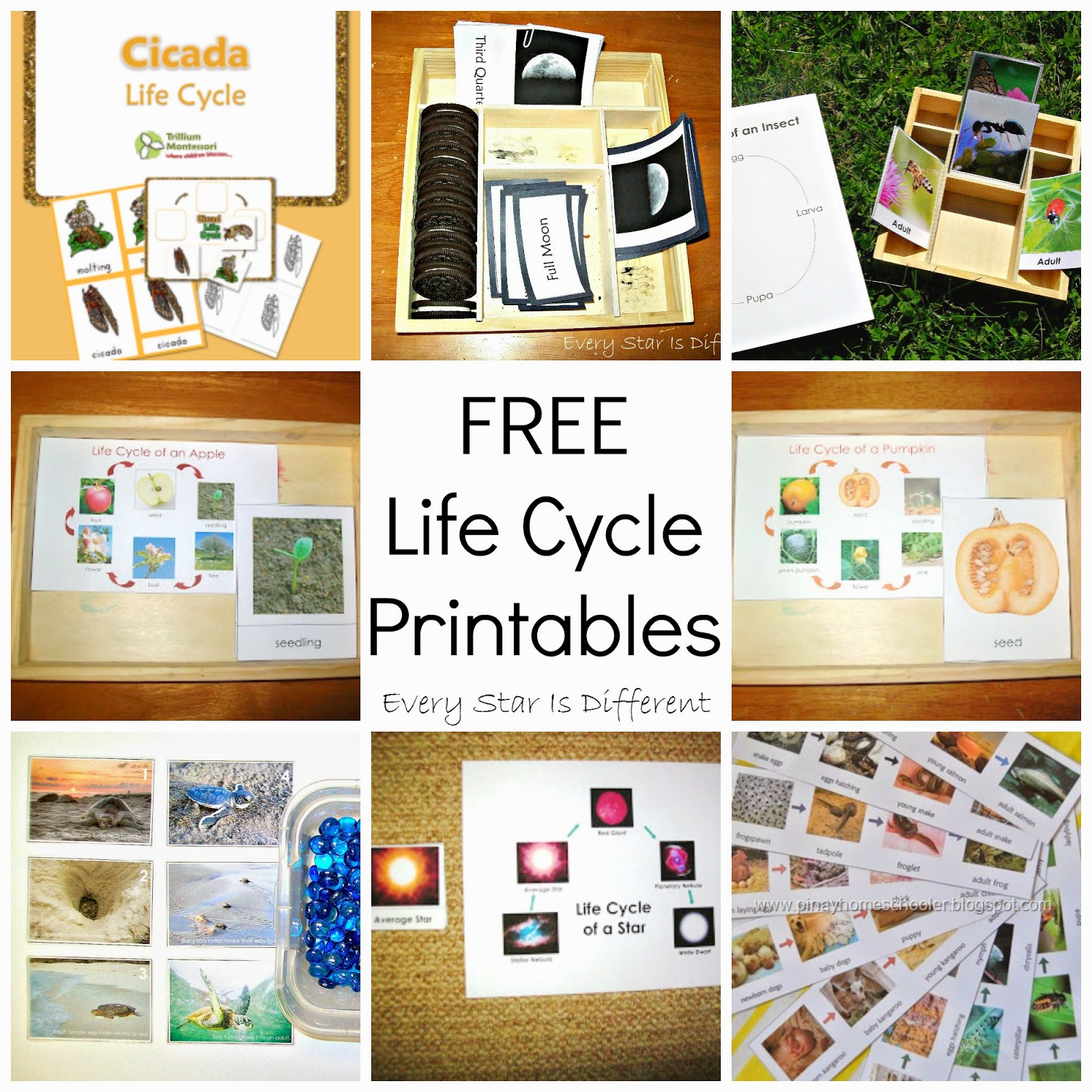 Montessori Inspired Sequencing Activities Amp Free