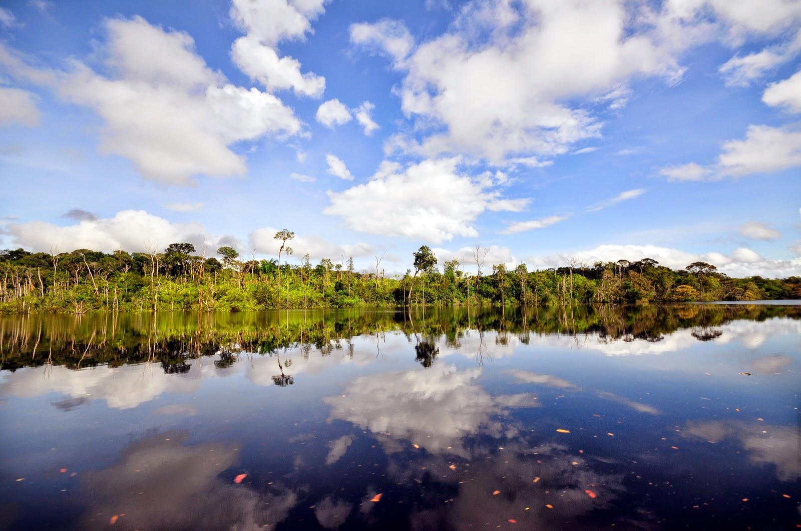 Alternativas Sustentáveis para o Desenvolvimento da Amazônia