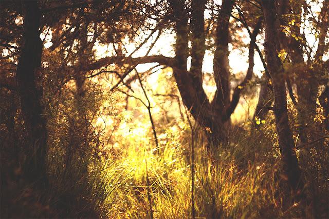 sie robi, jesien zachod slonca w lesie