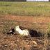 Seca castiga região de Pedro Alexandre (BA) deixando consequências tristes; Vídeo