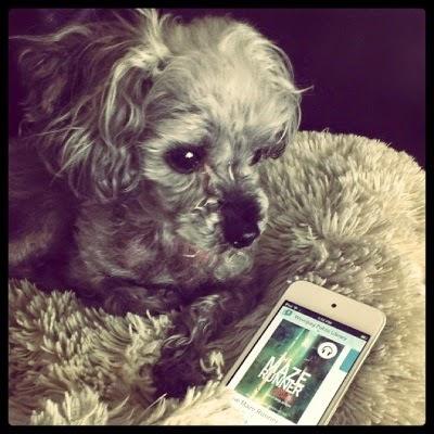 Murchie glares at something off screen from the safety of his sheep-shaped pillow. Beside him sits a white iPod touch with The Maze Runner's cover on its screen. The cover is hazy green and brown, but difficult to make out in its entirety.