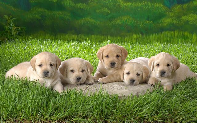 Vijf schattige hondjes op het gras