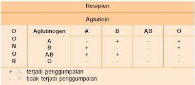 Jenis dan Sistem Penggolongan Darah Manusia Untuk Kegiatan Transfusi atau Donor Darah