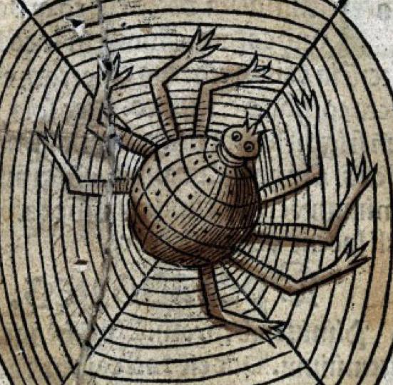 Hämähäkkipelko