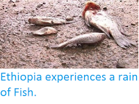 http://sciencythoughts.blogspot.co.uk/2016/02/ethiopia-experiences-rain-of-fish.html