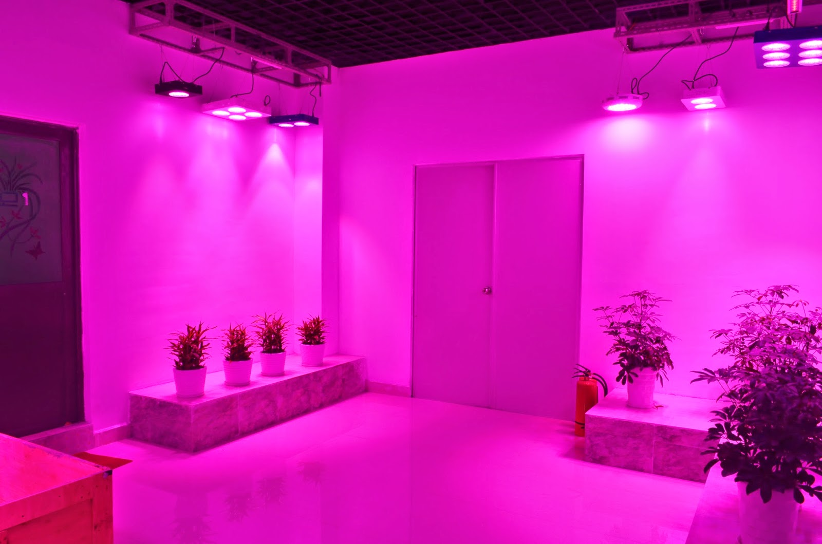 Led Lighting Our New Showroom And Advantages Of Some Kinds Lights