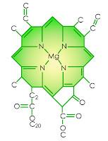 Yeşil renkli klorofil molekülü