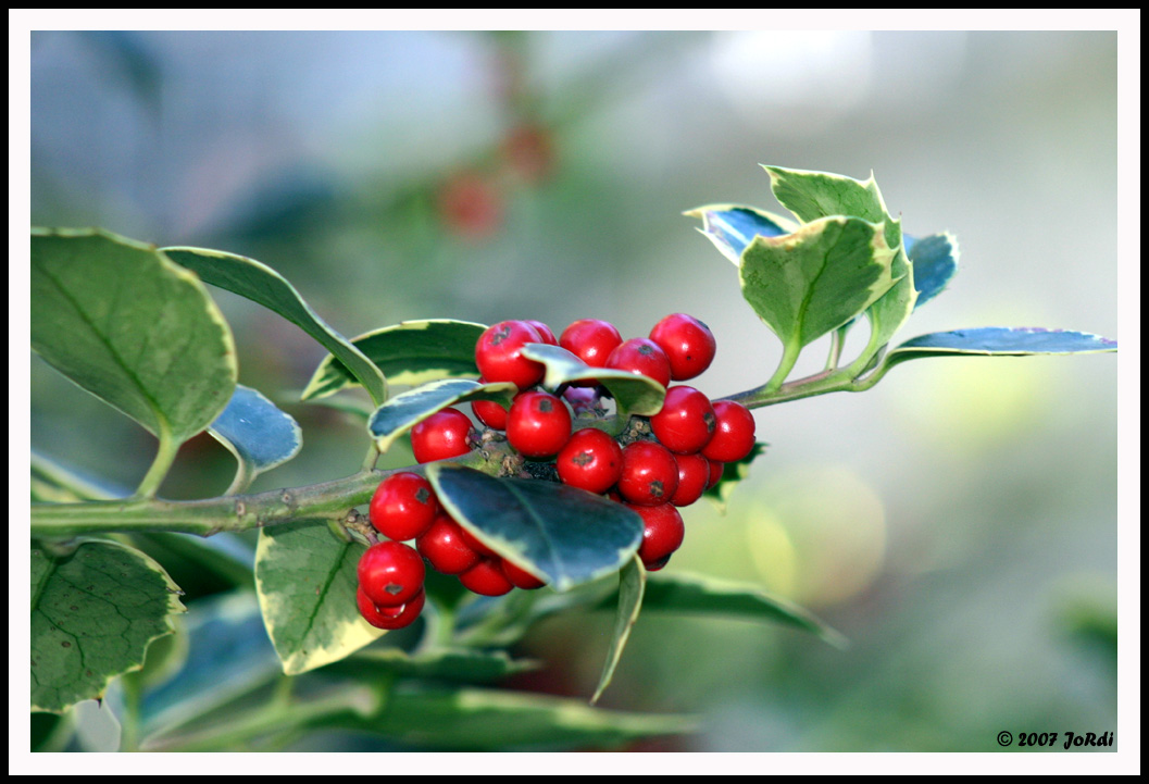 Esos bonitos detalles decoraci n navide a para todos los for Arbol de frutos rojos pequenos