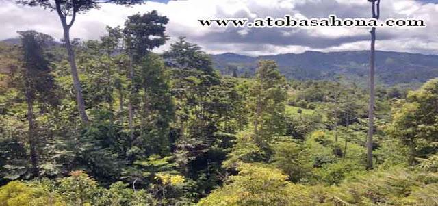 Pengertian Hutan Paling Lengkap Beserta Penjelasannya