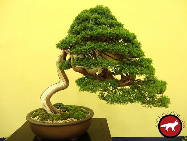 exposition de bonsai de Kyoto