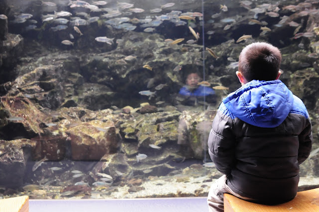 Travel Kyoto Aquarium