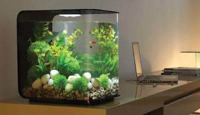 Aquarium Cupang Unik