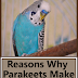 Reasons Why Parakeets Make Fantastic Pets